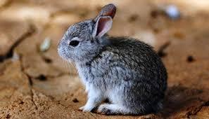 PAG-conejo