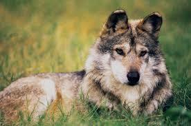 PAG-perro