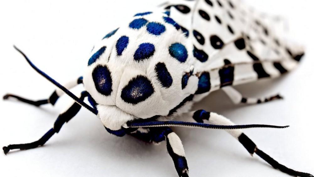 PAG-imsecto.jpg