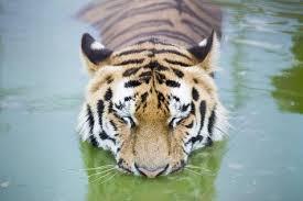 PAG-jaguarmas