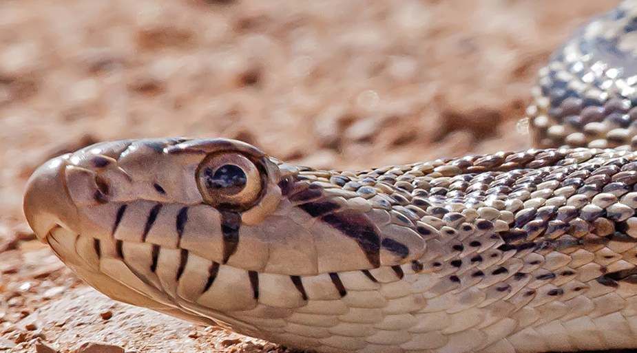 PAG-serpienteH
