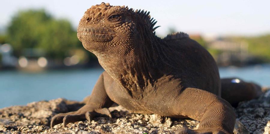PAG-iguanapag