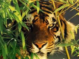 PAJ-jaguartres.jpg