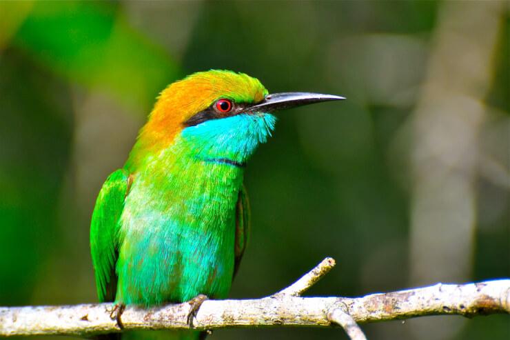 PAG-colibri-esmeralda