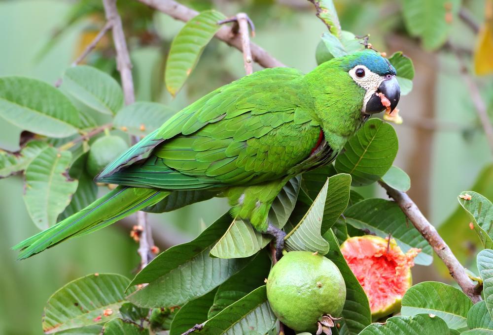 PAG-eriquitoconguabas