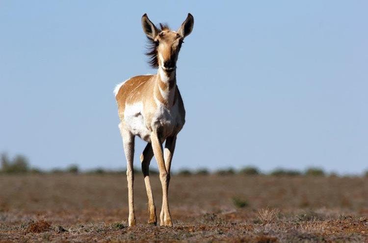 PAG-jirafa