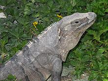 PAG-reptil