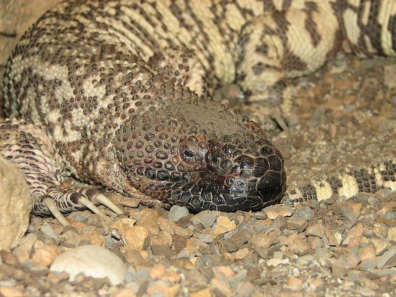 PAG-reptil1.2