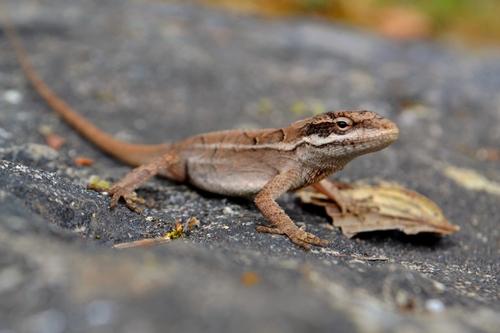 PAG-reptil10