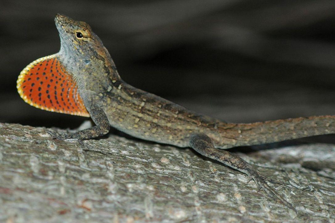 PAG-reptil11