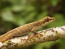 PAG-reptil112