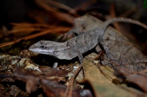 PAG-reptil12
