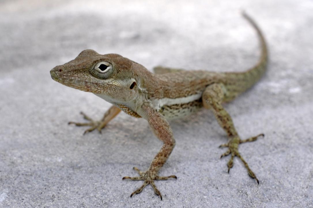 PAG-reptil13