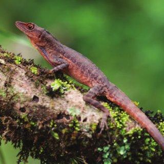 PAG-reptil15