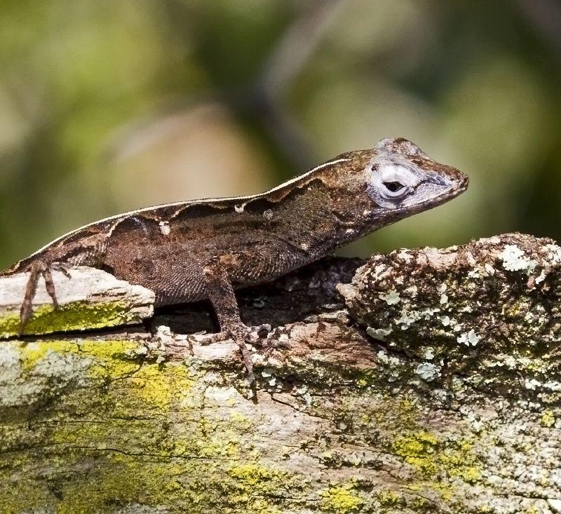 PAG-reptil16