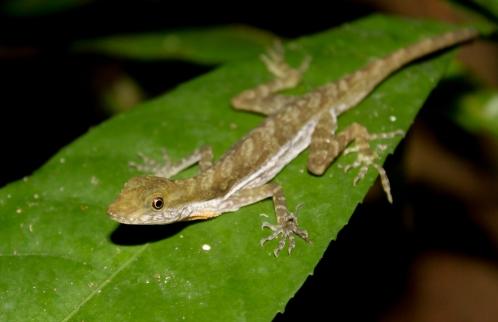 PAG-reptil23