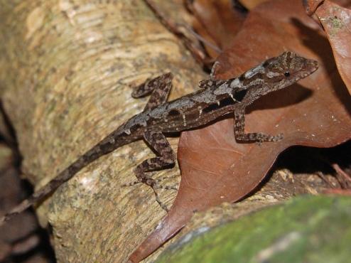 PAG-reptil25