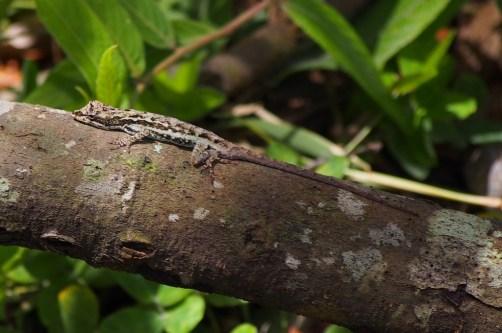 PAG-reptil28