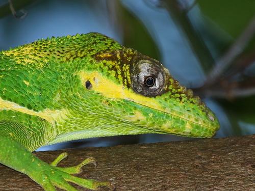 PAG-reptil29