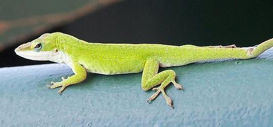 PAG-reptil30