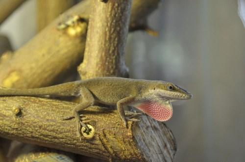 PAG-reptil31