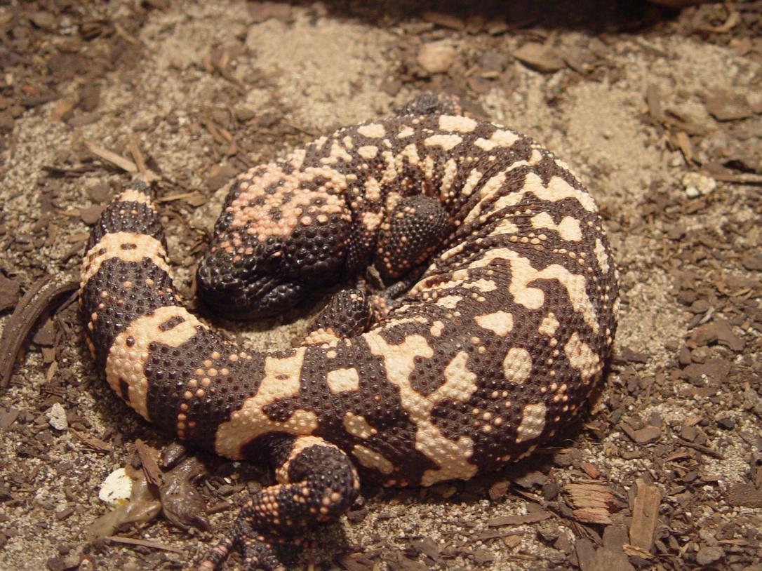 PAG-reptil4
