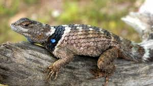 PAG-reptil9