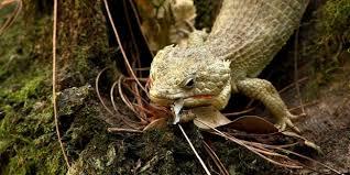 PAG-reptil-1