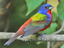 PAG-pajaritodecolores