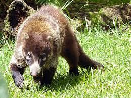 PAG-mapach