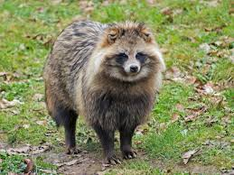 PAG-mapach1