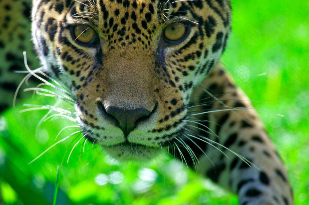 PAG-jaguarsb.jpg