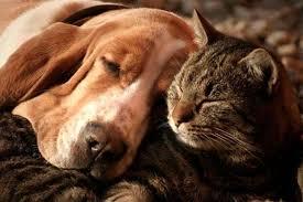 PAG-perro-gato